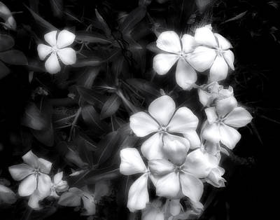 Dainty Blooms - Black And White Photograph Poster by Ann Powell