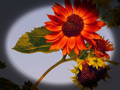 Dainty Red Sunflower Poster