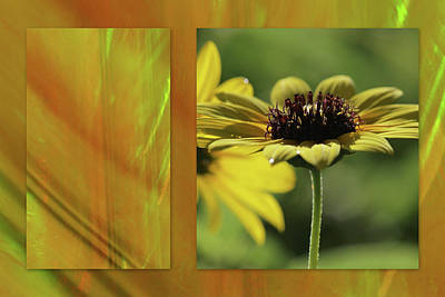 Poster featuring the digital art Daisy Diptych by Irma BACKELANT GALLERIES