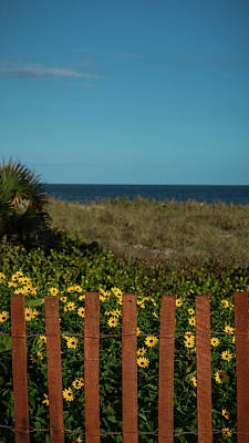 Daisy Dune Fence Delray Beach Florida Poster by Lawrence S Richardson Jr