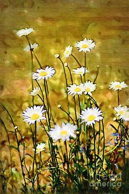 Poster featuring the photograph Daisy Field by Donna Bentley