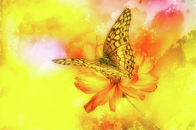 Daisy For A Butterfly Poster