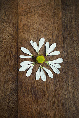 Daisy Petals On Wooden Background  Poster