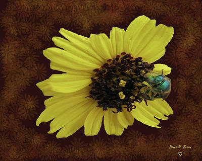 Poster featuring the photograph Daisy With Bee  by Donna Brown