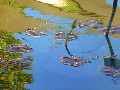 Dallas Botanical 5 Of 5 Poster by Tina M Wenger