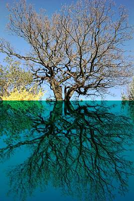 Dancers Tree Reflection  Poster