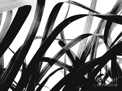 Dancing Bamboo Black And White Poster
