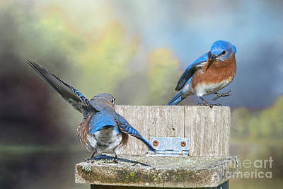 Dancing Bluebirds Poster by Bonnie Barry