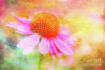 Dancing Coneflower Abstract Poster