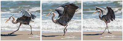 Dancing Heron Triptych Poster
