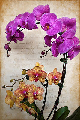 Dancing Orchids Poster