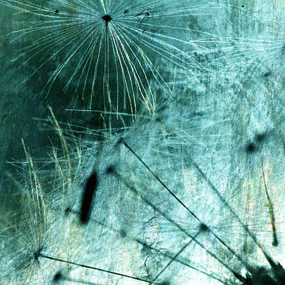 Dandelion Art 8 Poster by Falko Follert