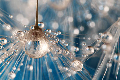 Poster featuring the photograph Dandelion Blue Sparkling Drops by Sharon Johnstone