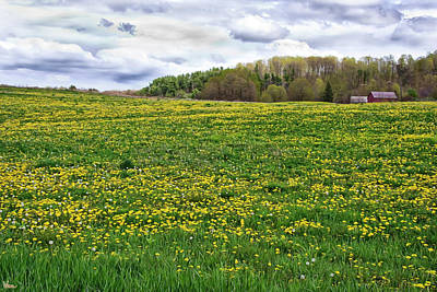 Dandelion Field With Barn Poster
