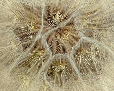 Dandelion Particles Poster