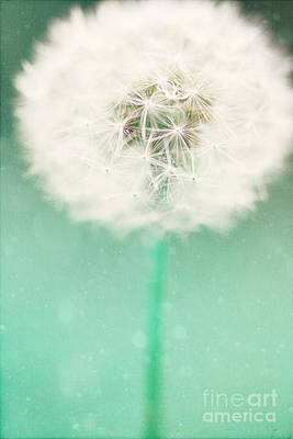 Dandelion Seed Poster