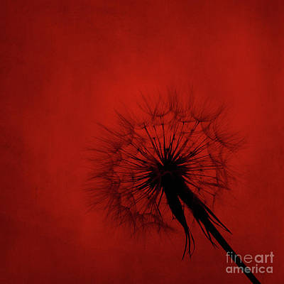 Dandelion Silhouette On Red Textured Background Poster