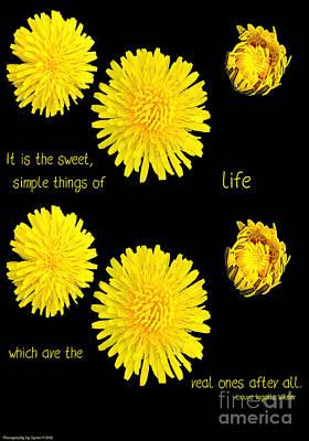Dandelion Simplicity Poster by Gena Weiser