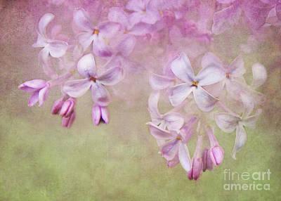 Dangle Me Lilac Poster