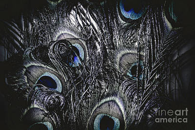 Dark Blue Peacock Feathers  Poster by Jorgo Photography - Wall Art Gallery