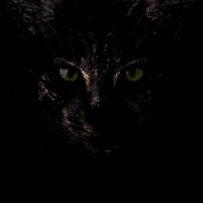 Dark Knight Poster by Helga Novelli