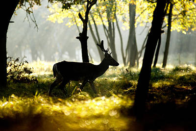 Dark Deer In Illuminated Forest Poster by Roeselien Raimond