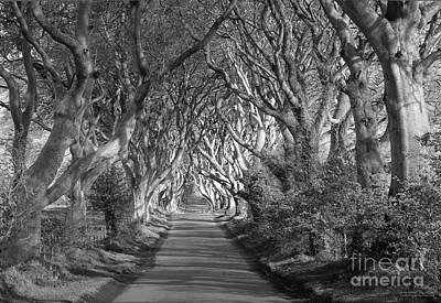 Dark Hedges Ireland Poster by Patrick McGill