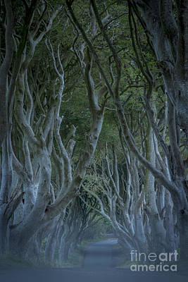 Dark Hedges - Misty Night Poster by Brian Jannsen