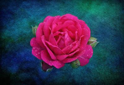 Dark Pink Rose Poster by Sandy Keeton