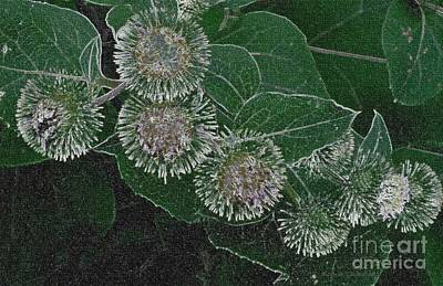 Poster featuring the photograph Dark Thistles by Kathie Chicoine