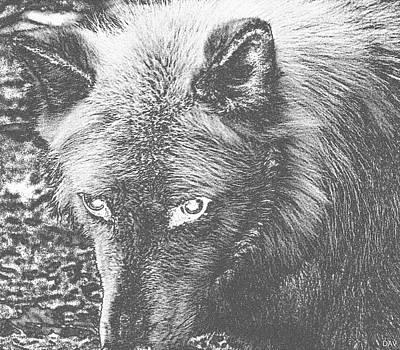 Darkside Wolf Poster