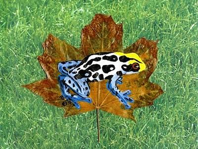 Dart Poison Frog Poster