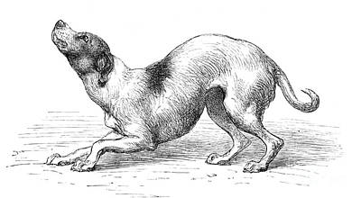 Darwins Humble Dog, Illustration, 1872 Poster by Wellcome Images