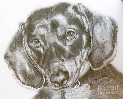 Daschund Pencil Drawing Poster