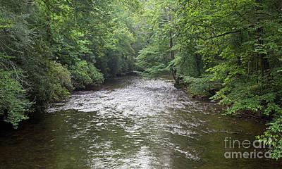 Davidson River In North Carolina Poster