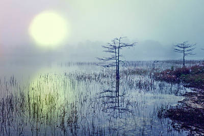 Dawn Over The Glade Poster by Debra and Dave Vanderlaan