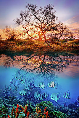 Poster featuring the photograph Dawn Over The Reef by Debra and Dave Vanderlaan