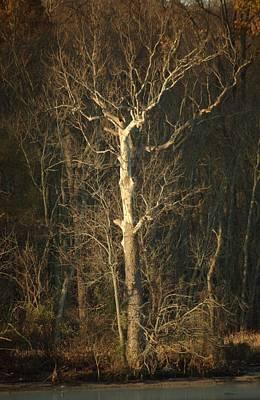 Day Break Tree Poster