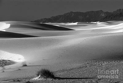 Daybreak At White Sands Poster by Sandra Bronstein