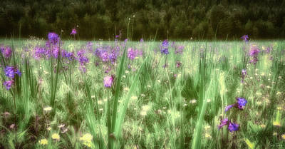 Daydreams In A Meadow Poster