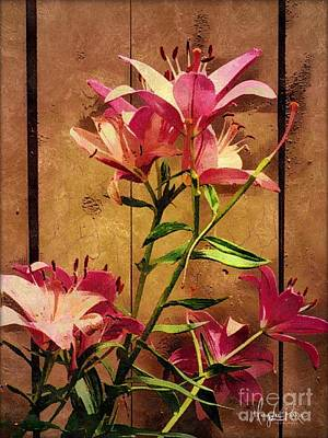 Dayliliys In  Guilford , Conn Poster
