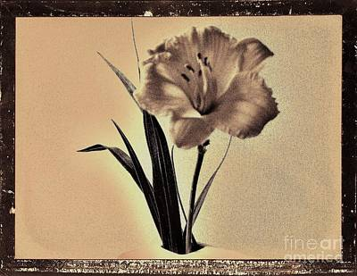 Daylily Of Old Poster by Marsha Heiken