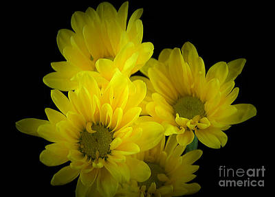 Dazzling Yellow Poster by Ray Shrewsberry