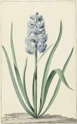 De Blauwe Hyacint Franciscus Poster