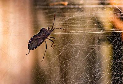 Dead Bug Wiggling Poster by Steve Harrington
