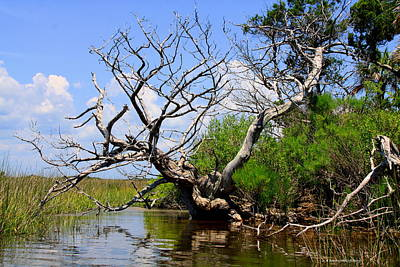 Poster featuring the photograph Dead Cedar Tree In Waccasassa Preserve by Barbara Bowen