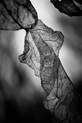Fragile Leaf Bw Poster