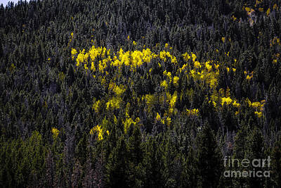 Yellow Fire Poster by Jon Burch Photography