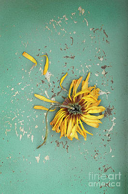Poster featuring the photograph Dead Suflower by Jill Battaglia