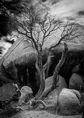 Dead Tree And Boulder At Joshua Tree Poster